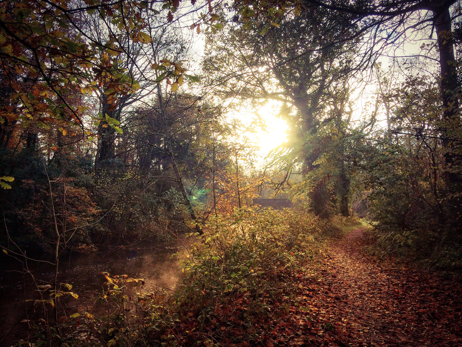Dunmore Wood - Autumnal Morning, by Andy Walsh