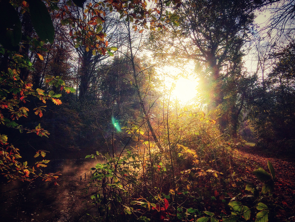 Autumn Woodland, by Andy Walsh