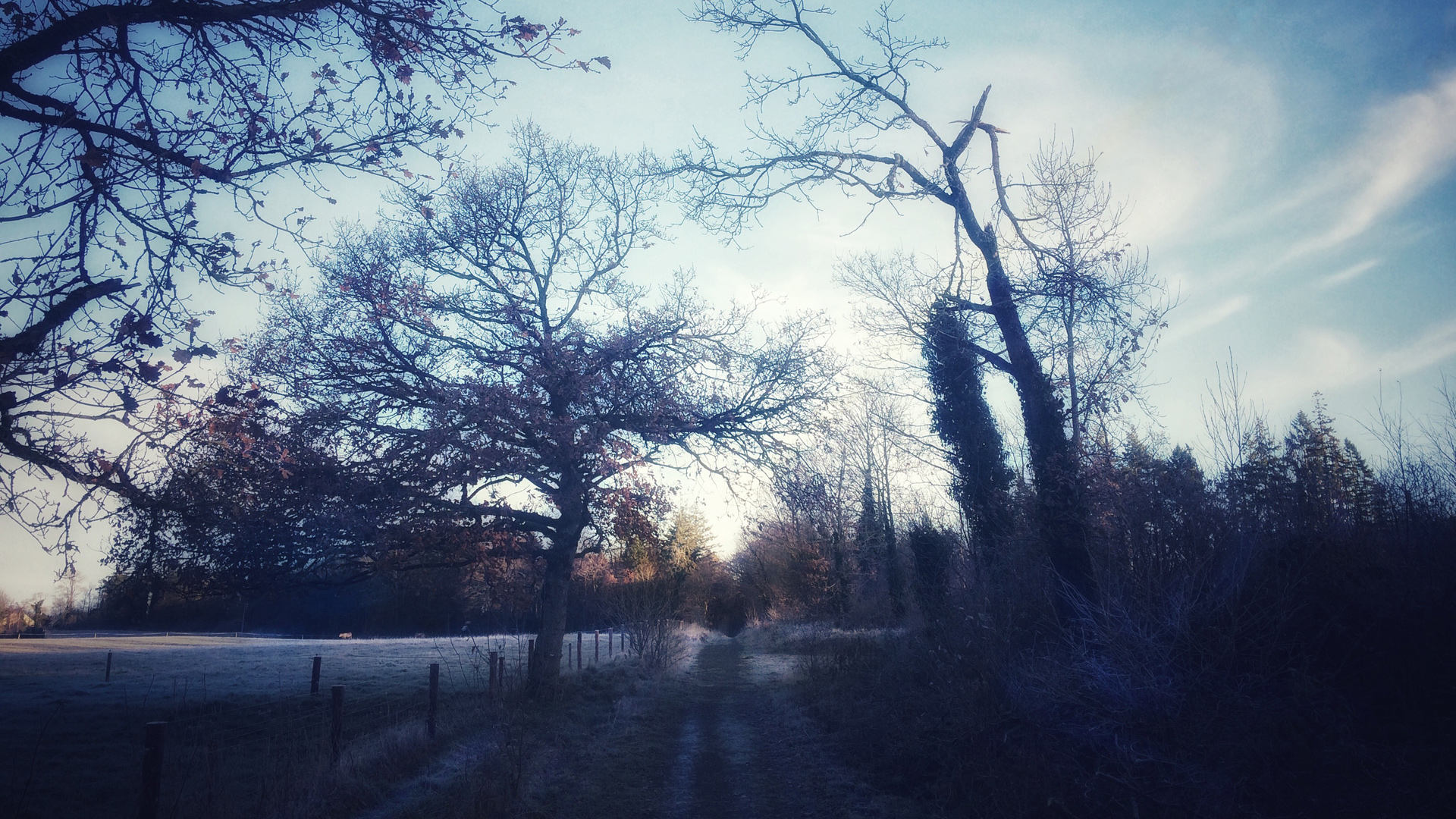 A Frosty Morning At Dunmore Wood, Durrow.