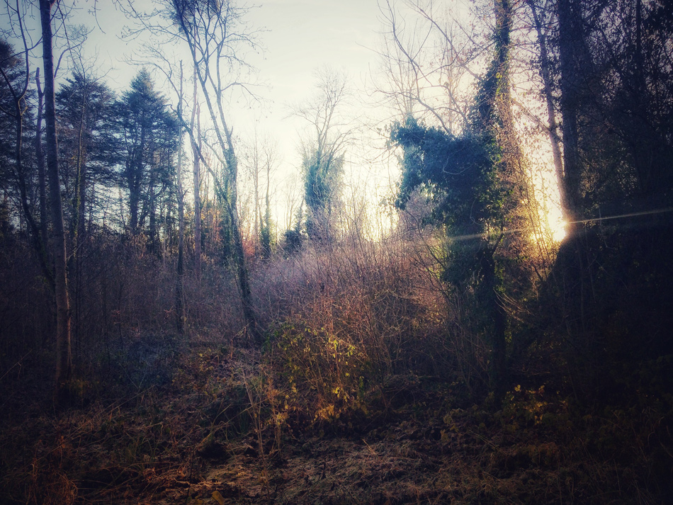 Photograph - Dunmore Wood, Durrow
